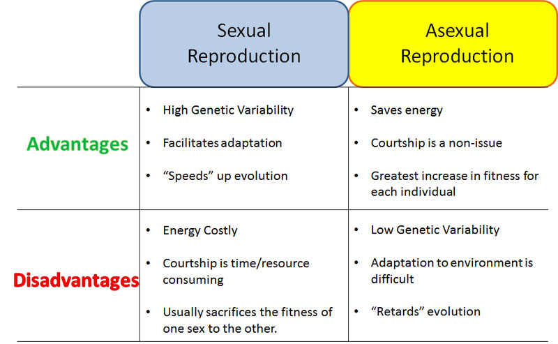 Diatom asexual reproduction advantages